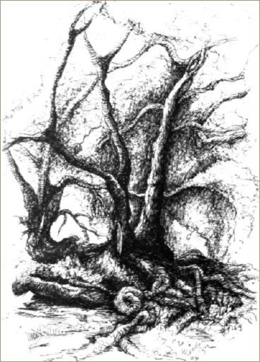 Baum for Raumgestaltung lyrik